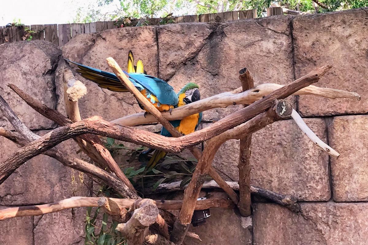aves en el zoológico de palm beach lugares para visitar en Florida