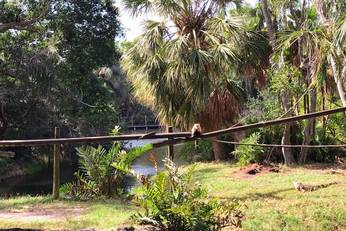 monos en el palm beach zoo lugares para visitar en Florida
