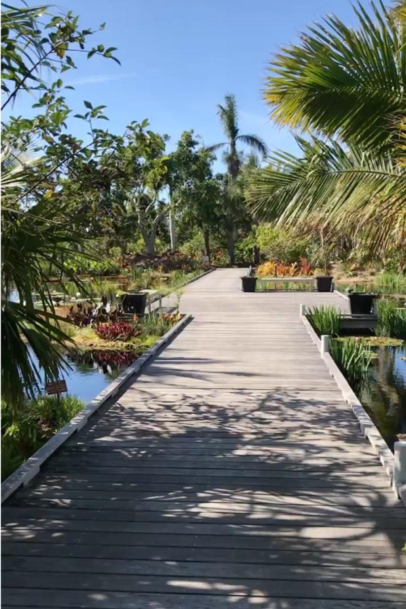 caminata por el Jardín Botánico de Naples Florida